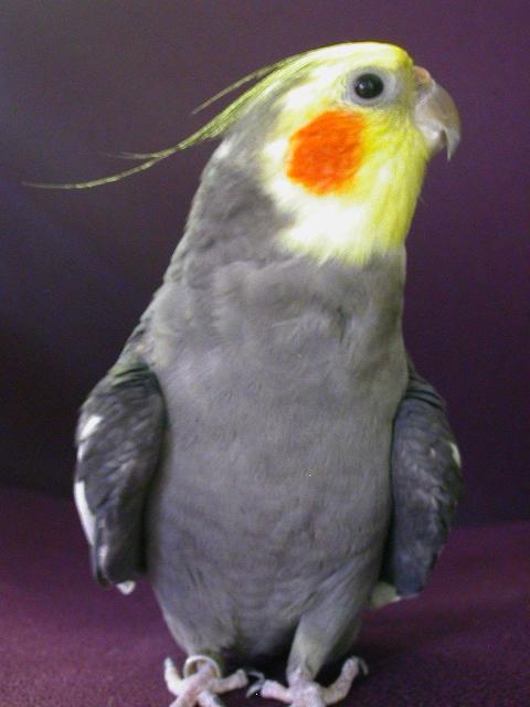 Quasi_bird