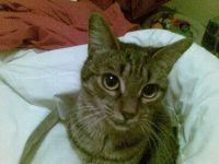 bellycat2.jpg