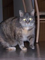 cali_and_sassy_-_In_Memory_of_Pets_2009_009.jpg