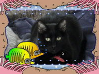 Sammy_s_in_the_Fish_Tank.jpg