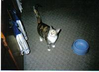 sox_the_cat.jpg