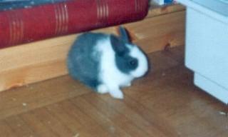 Buggs_Bunny_08_95