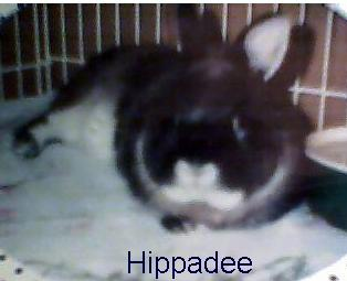 hippadee2