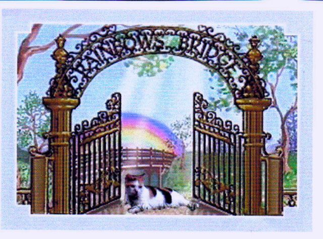 Coco_at_Rainbow_Bridge-1